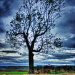 """""""The Tree"""" by InspiraImage"""