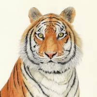 Tiger Art Prints & Posters by Patrizia Donaera