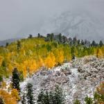 """ASPENS IN SNOW"" by pbk"