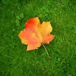 """""""Red leaf"""" by KarolinaDebowska"""
