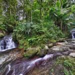 """Rain Forest (Toro Negro)"" by rodneysoto"