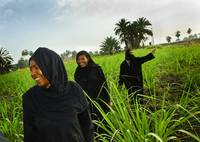 Egyptian Women coming out of the reeds