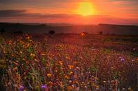 HDR of Flowers at sunrise