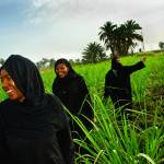 """Egyptian Women Coming out of the Reeds, Luxor"" by ileneperlman"