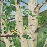 """Birch tree"" by JustinMillard"