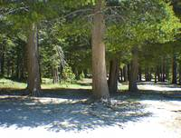 Trees in Sandy Ground