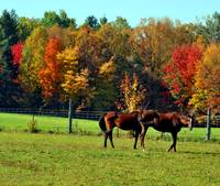 Autumn Equines