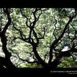 """Branches"" by smevinsphotography"