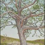 """Torrey Pine"" by JustinMillard"