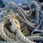 """knots"" by wildsagestudios"