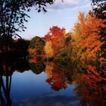 """""""Lewin Pond"""" by wildsagestudios"""