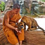 """Monk and Tiger, Thailand"" by dpsmith7"