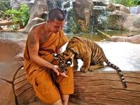 Monk and Tiger, Thailand