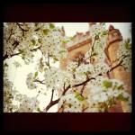 """White Flowers"" by JenniferEdwards"