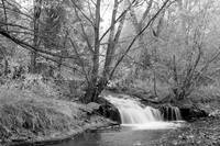 Forest Creek Waterfall in Black and White