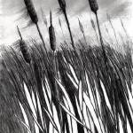 """Cattail Field"" by PabloPalhais"