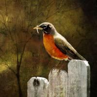 Robin's Dream Art Prints & Posters by Eddie Cornett