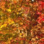 """Fall Tapestry"" by julieandel"