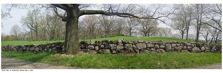 Classic Stone Wall and Tree