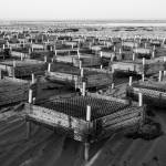 """Oyster Farm Cages at Crowe"