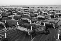 Oyster Farm Cages at Crowe's Pasture