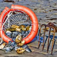 Oysters and Clams Art Prints & Posters by Bruce Christopher