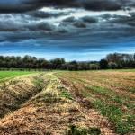 """""""Field Walks"""" by InspiraImage"""