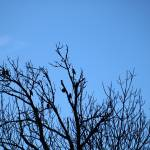 """Birds in Tree Silhouette"" by DryFlyPhotograhy"