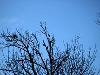 Birds in Tree Silhouette