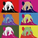 """Panda Pop Art 2"" by FordLou"