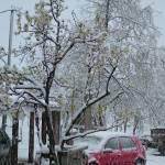 """Late Spring Snow"" by gezimgeci"