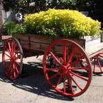 """Flower Wagon"" by GColeman"