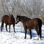"""""""Horses in the Snow"""" by PettProjects"""