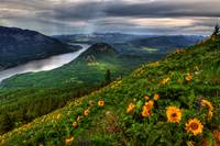 Columbia River Gorge from Dog Mountain