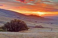 Dalles Mountain at Sunrise
