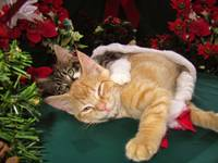 Two Christmas Kittens in Love, Squinting Cat Smile