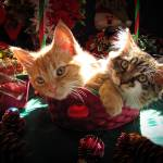 """Christmas Kittens Together, Xmas Kitty Cats Basket"" by Chantal"