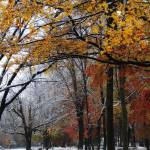"""Autumn Snow"" by kjb"