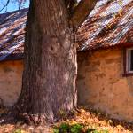 """Tree and warm stonework wisconsin building"" by danteoblique"