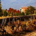 """Tuscan Countryside"" by raetucker"