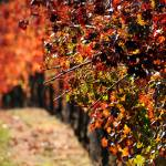 """Autumn Vines"" by LJS"