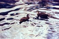 blk duck pair
