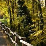 """""""Autumn Roadside"""" by raetucker"""