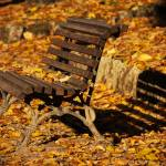 """Autumn Bench Shadow"" by raetucker"