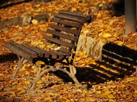 Autumn Bench Shadow