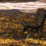 """Autumn Park Bench"" by raetucker"