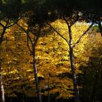 """""""Arezzo in the Autumn"""" by raetucker"""