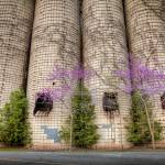"""Vines on Silos"" by geophotos"