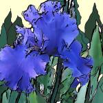 """Blue Iris"" by MiraDimi"