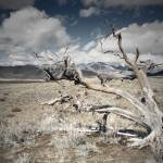 """Dead Tree"" by Mattfarley"